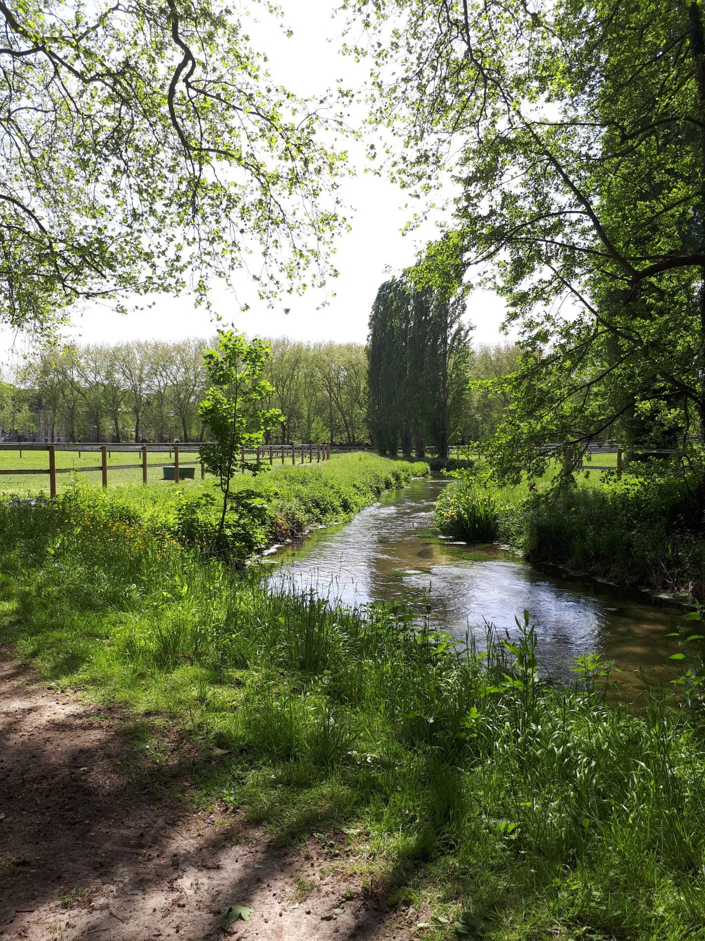 La restauration de la continuité écologique de la rivière École dans le parc du château de Courances