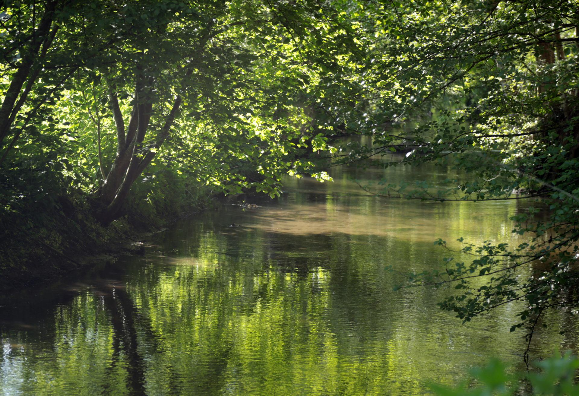 Le réseau hydrographique de la rivière École